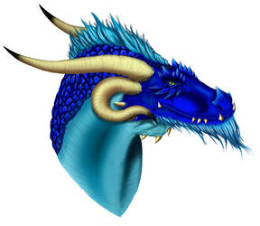 Dragon project: Head