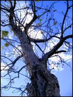 the tallest tree by Bleu-Flamme
