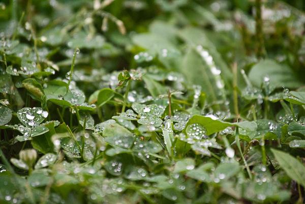 A mini jungle in the lawn. by vash34