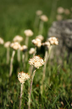 Irondale Cemetery Flowers