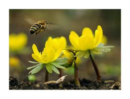 flying bee by Bodghia