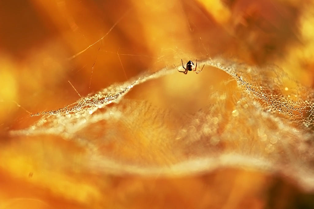 web by Bodghia