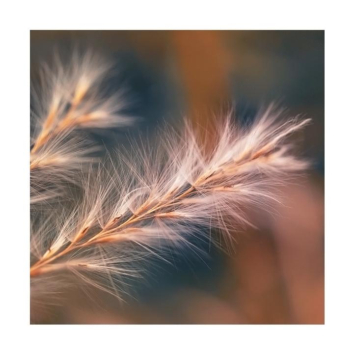 fluff by Bodghia