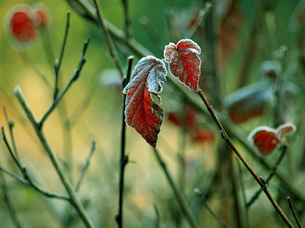 Leaves by Bodghia
