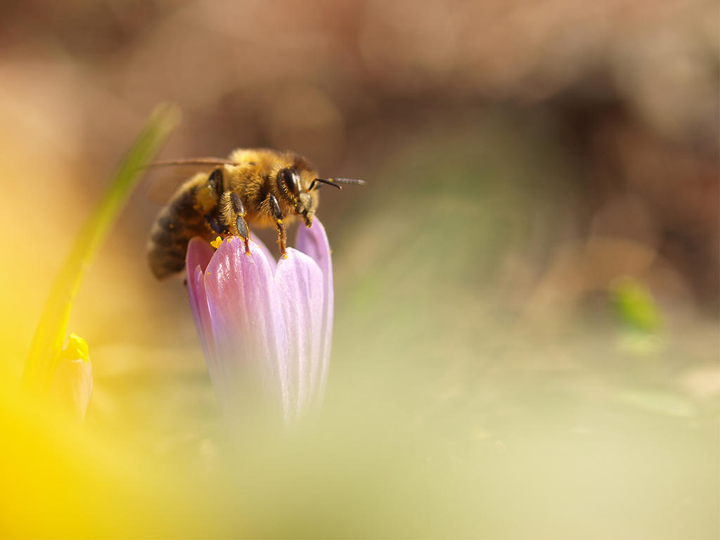 Bee by Bodghia