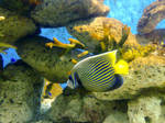 Fish Do Live by hikarucute