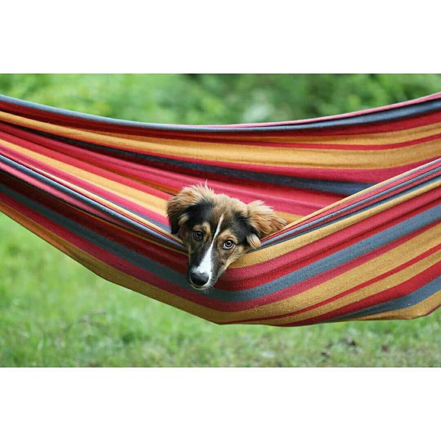 Relaxing in the hammock  by kihi1114