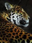 Don't Wake the Jaguar
