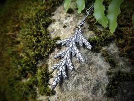 Thuja plicata - Western Red Cedar Pendant by QuintessentialArts
