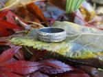 Achillea millefolium Ring