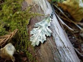 Quercus spp.  Redding, Ca Oak by QuintessentialArts
