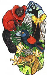Magical Madagascar by lemurkat