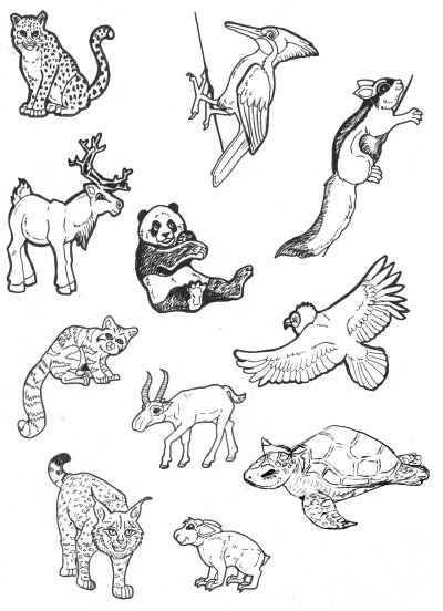 Line Drawings Of Endangered Animals : Even more endangered animals by lemurkat on deviantart