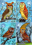 Owls of Whimsy