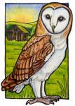 B is for Barn Owl by lemurkat