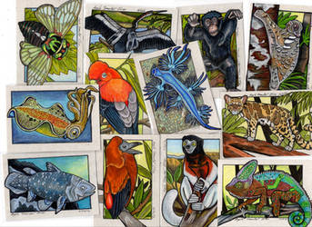 Animal Collage by lemurkat