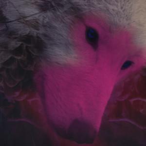 DreamScapeDragons's Profile Picture