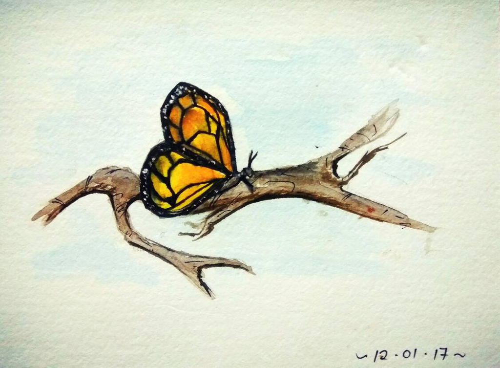 Monarch butterfly  by caeme