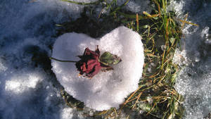 Snow White's heart