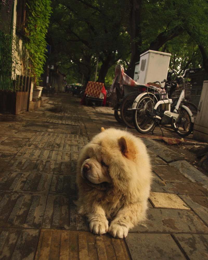 Lion Dog in Beijing by 0olong