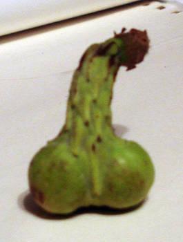 Penis Plant by SeltzerAddict