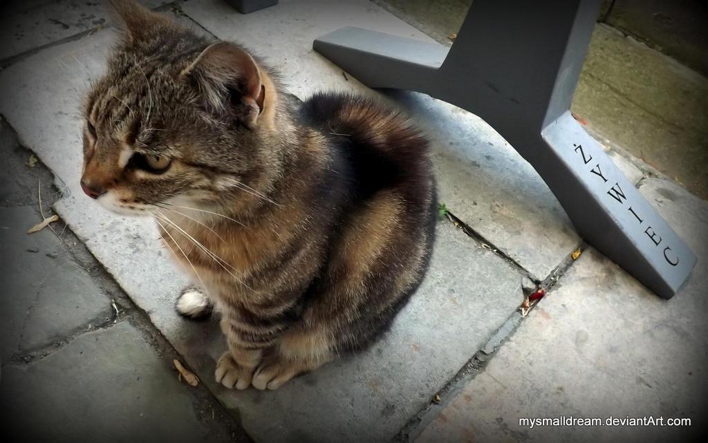 cat :) by mysmalldream