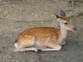Deer by archaemic