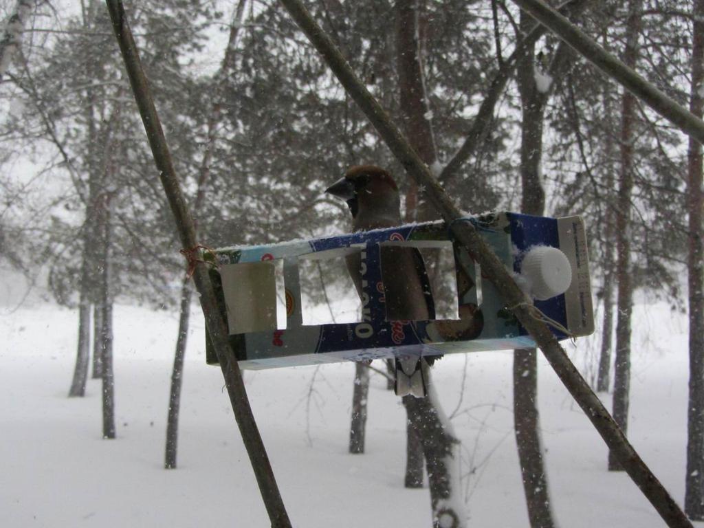 Hawfinch in a snowstorm by Milhet on deviantART
