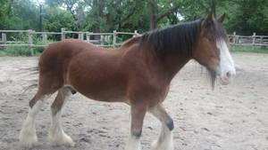 Riverdale Farm Horse
