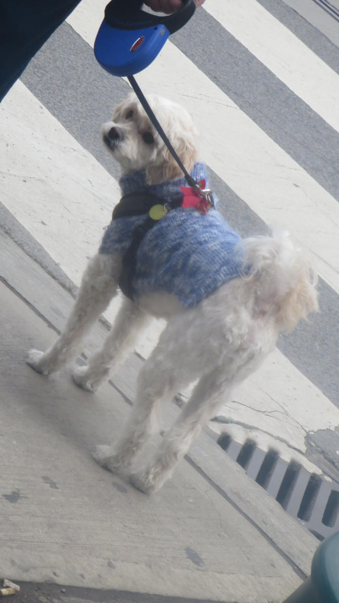 Big Dog Wearing Sweater Dog Wearing Blu...