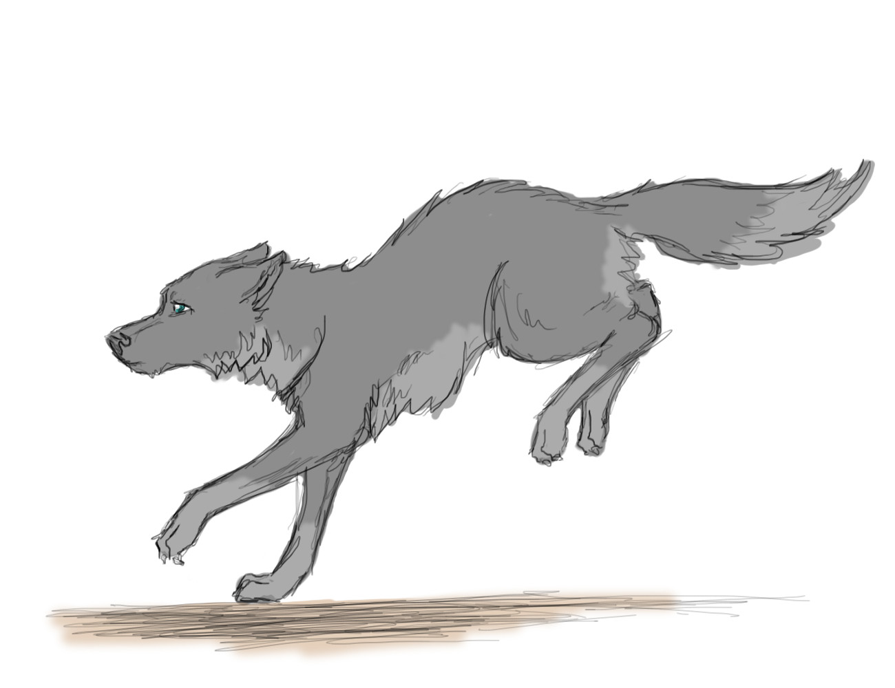 How to draw a wolf running towards you