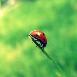 ladybug: hang in there by fluffylink