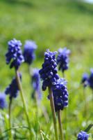 Spring by fluffylink