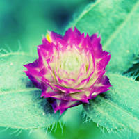 some flower by fluffylink