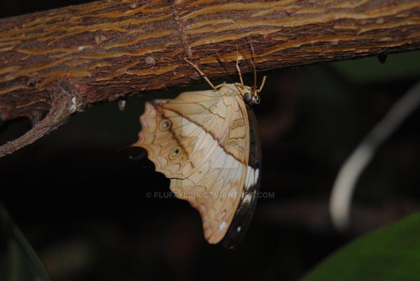 Leaf Butterfly by fluffylink