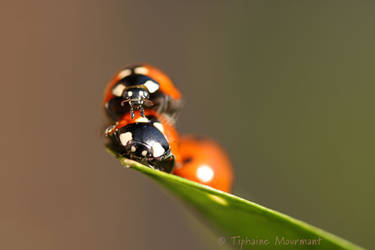 Ladybird's family