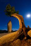 Heart of Joshua Tree