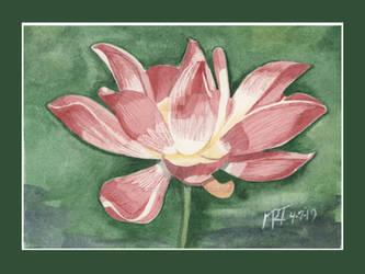 Lotus Blossom Framed