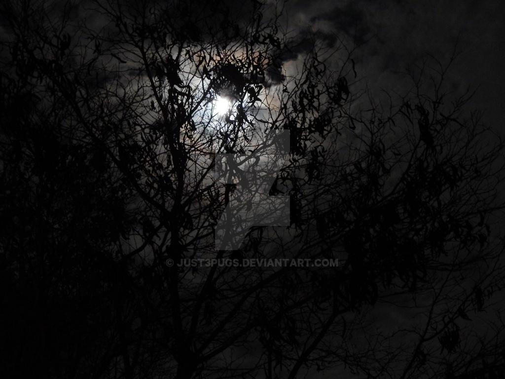 Beautiful Moonlight by just3pugs