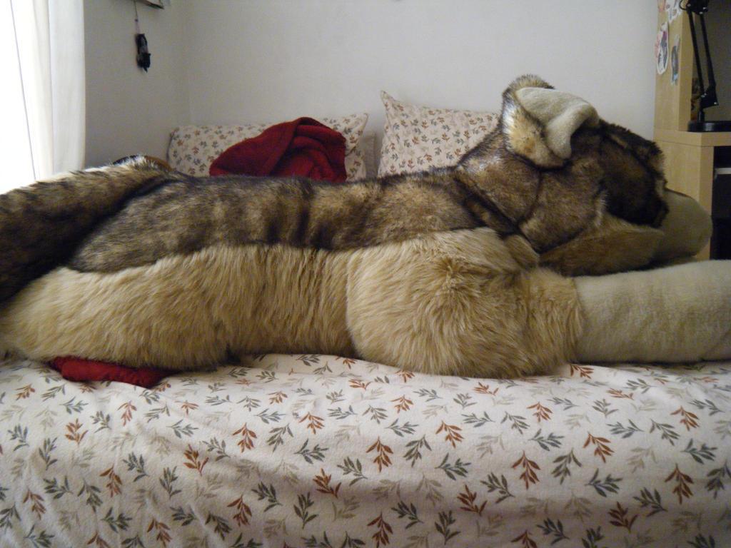 real giant wolf. Black Bedroom Furniture Sets. Home Design Ideas
