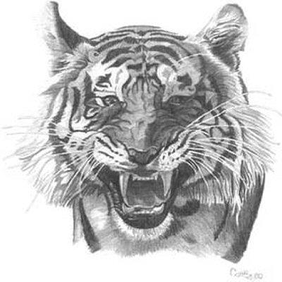 tiger pencil drawing T...