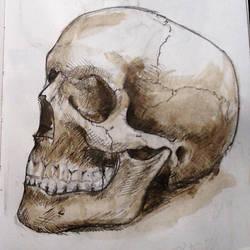 Sketchbook Skull by ClaudiaCooper