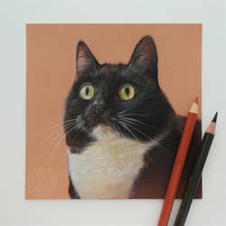 Curious Zelda - coloured pencil pet portrait by ClaudiaCooper