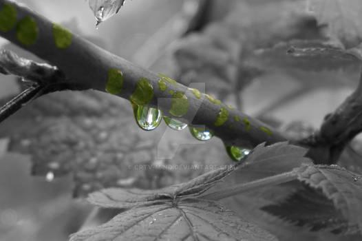The rain's beauty