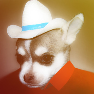 wachamonos's Profile Picture