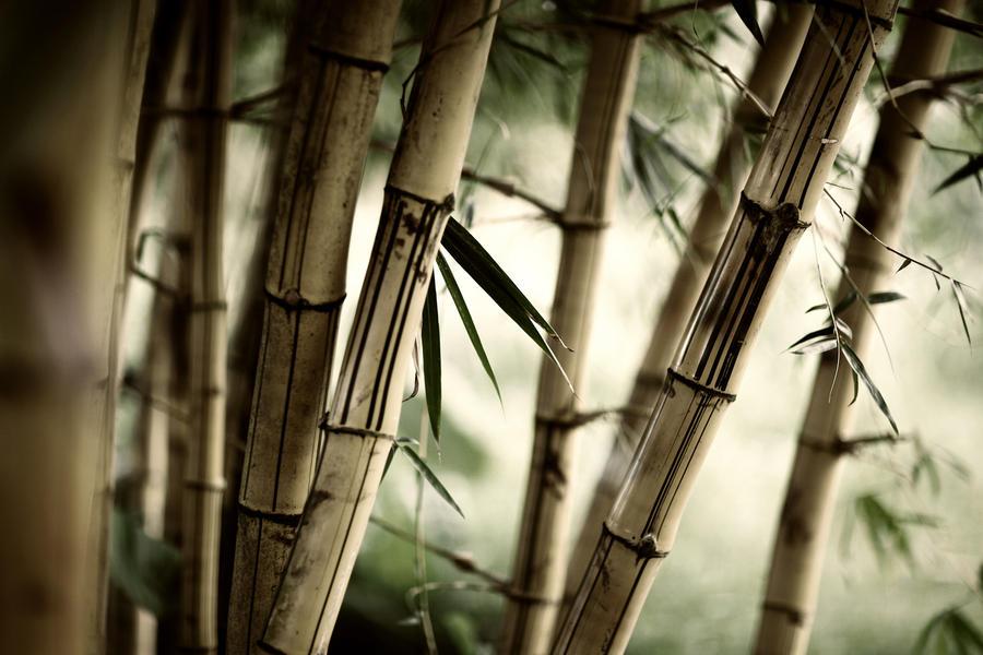 bamboo by dellon15