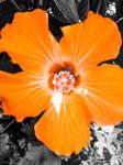 Flor Naranja Orange Flower