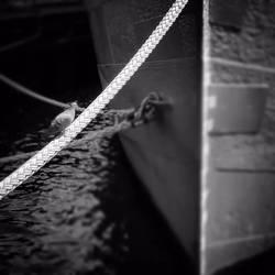 Sailing Dove