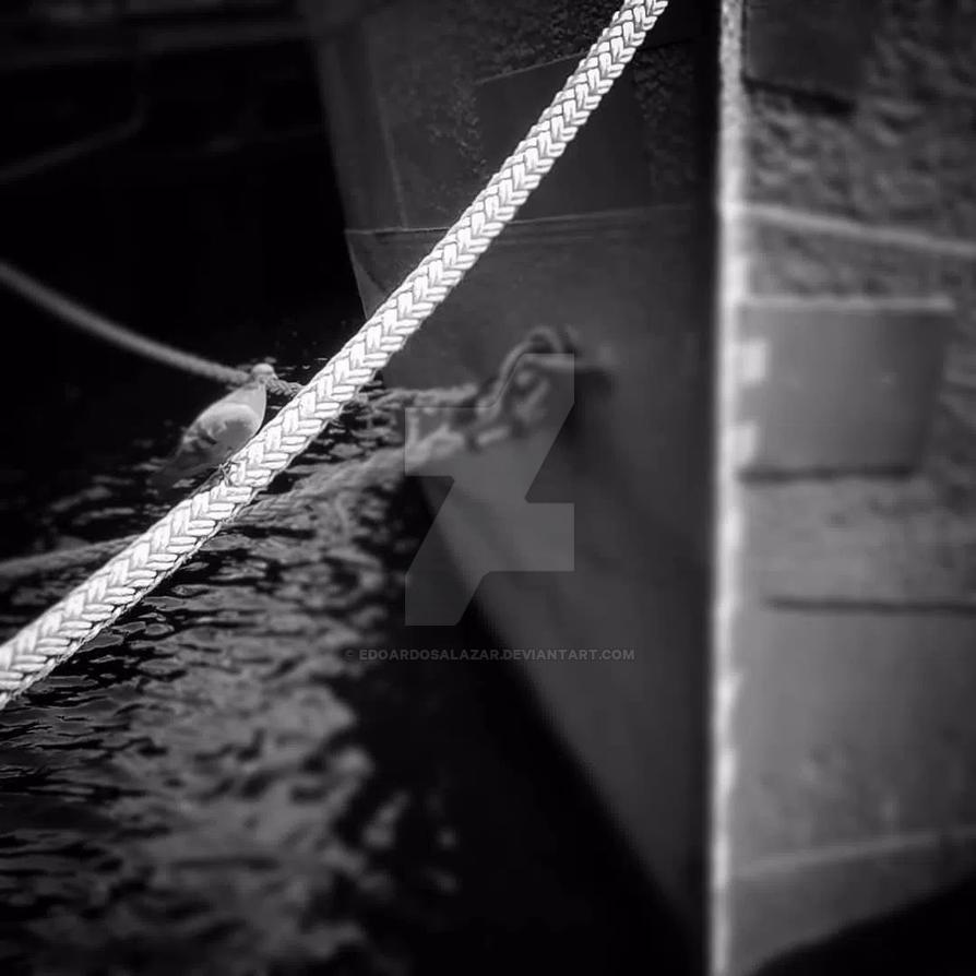 Sailing Dove by edoardosalazar