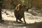 Hyena Squat